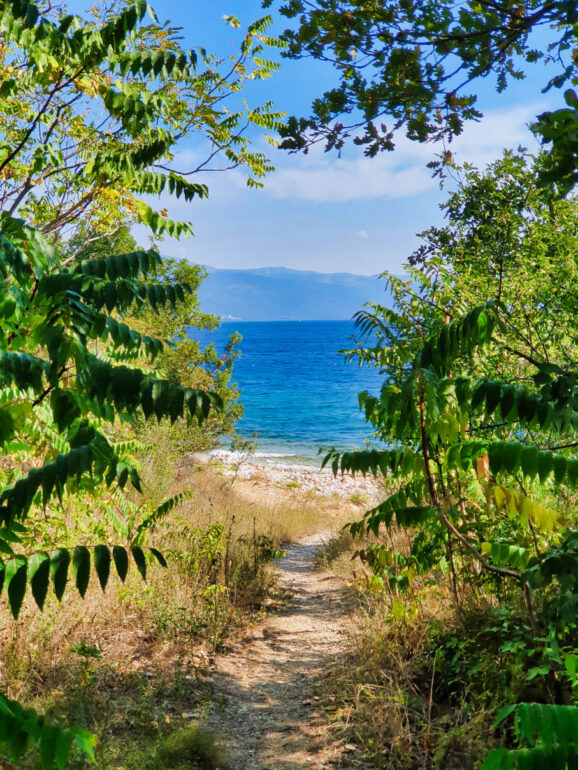 Trees along the path to a hidden beach close to Novi Vinodolski