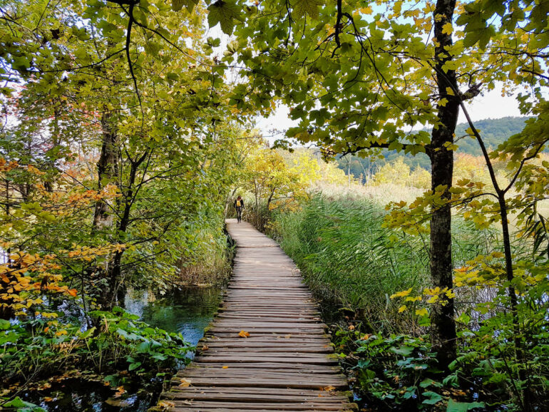 The type of boardwalks you'll walk on in the upper lakes