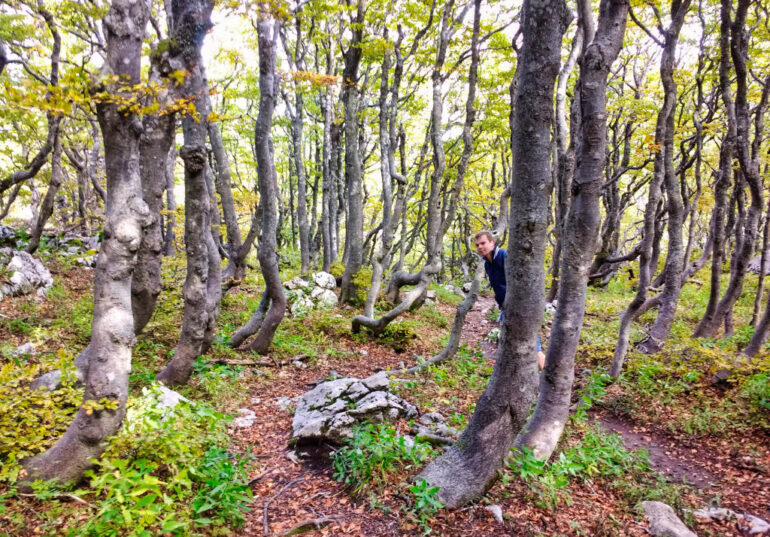 Fairy tale forest in Northern Velebit National Park